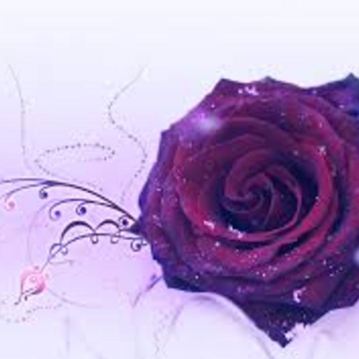 Normal rose 8